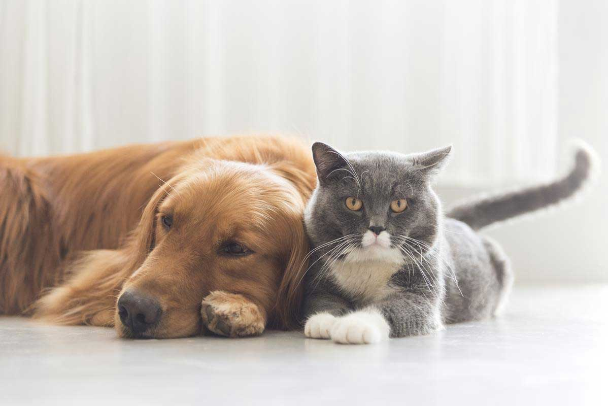 about our veterinary practice Panama City, FL
